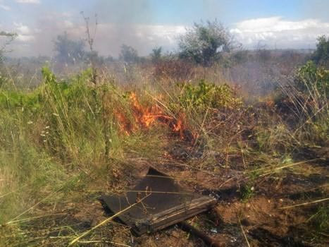 Сергей Шахов: ежедневно на полуострове фиксируют до 50-60 загораний сухой растительности